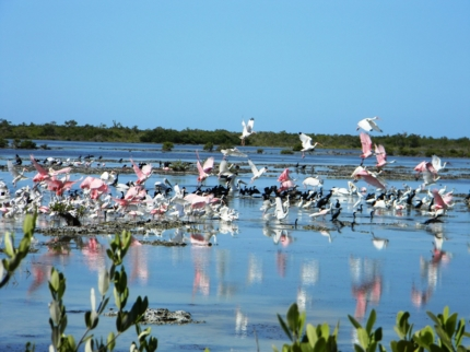 "Flamingos and herons in Las salinas- ""Hiking and Bird Watching"""