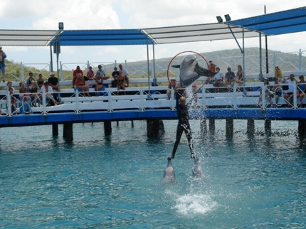 Swimming with dolphins tour at Bahía de Naranjo dolphinarium