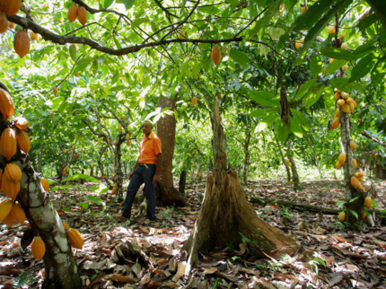 TRAIL OF THE COCOA - CASCADE OF THE DUABA Trekking Tour
