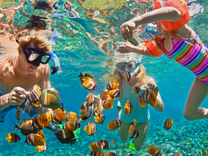 Snorkeling at the coral reef