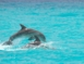 Dolphins in Cayo Coco